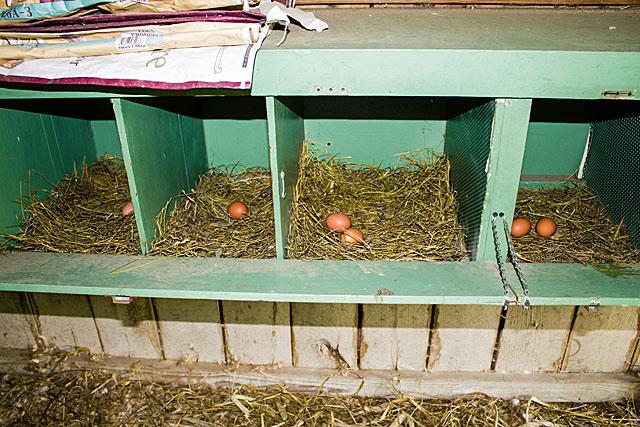 egg-hunt-6