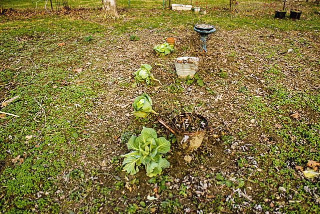 garden-remains