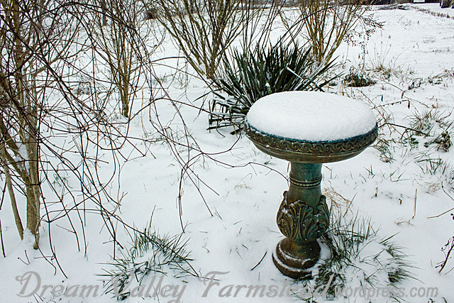 1st-snow-day-2.jpg