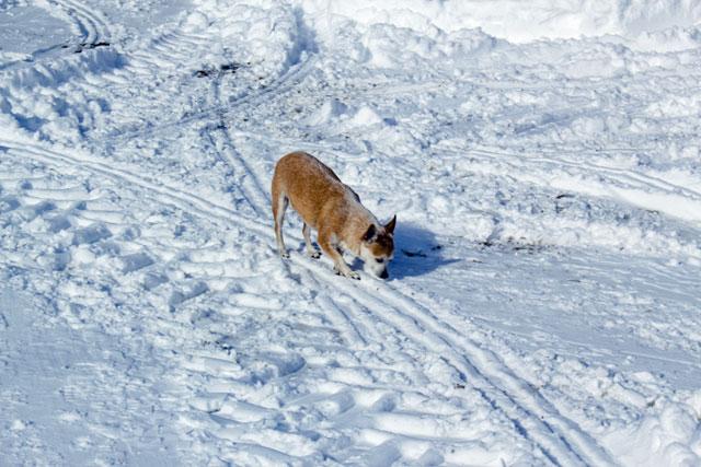 LizzieBelle-in-snow