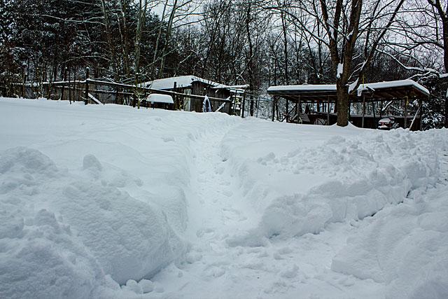 snow-paths.jpg