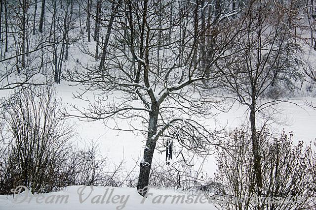 snow-pretty-4.jpg