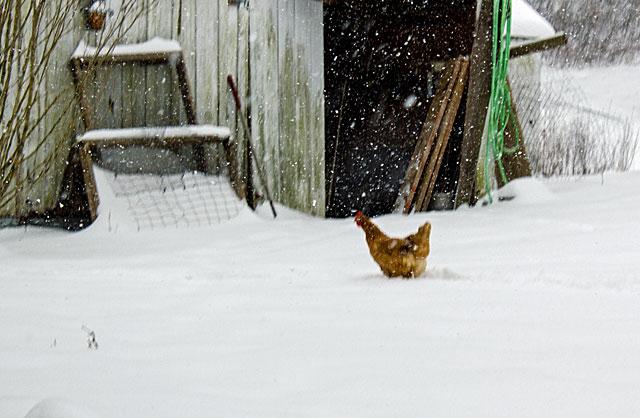 snow-pretty-5.jpg