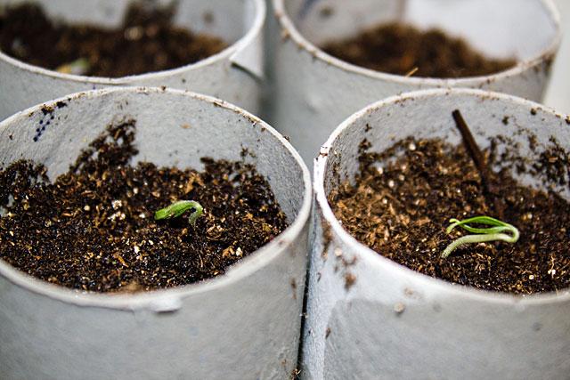 seed-test-starts-3