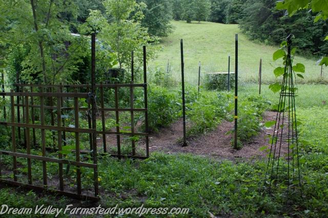 garden update July 1-3