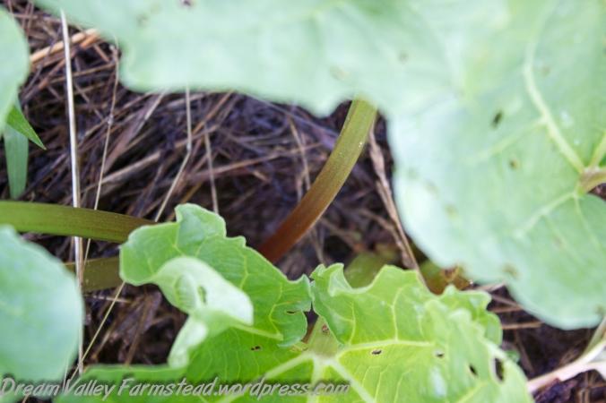 garden update July 1