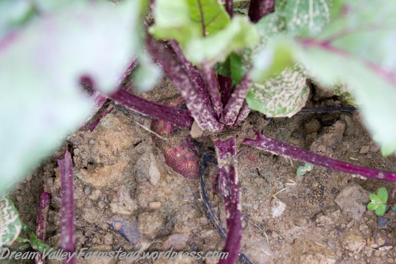 garden update July 11