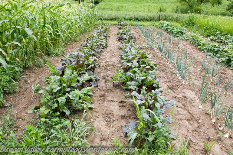 garden update July 13