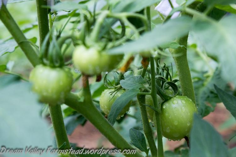 garden update July 6