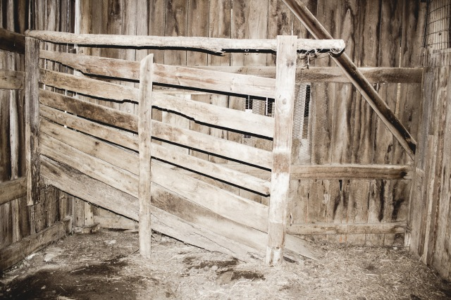 barnyard chickens 02