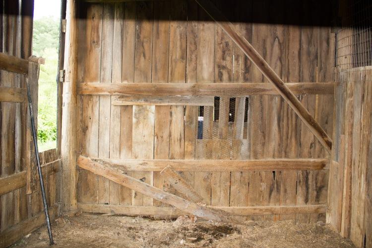barnyard chickens 05
