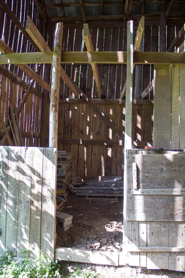 barnyard chickens_