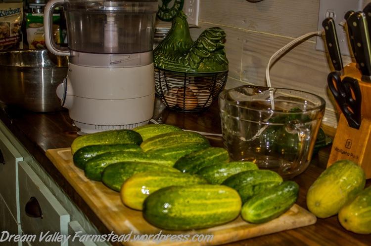 cucumbers 08.jpg