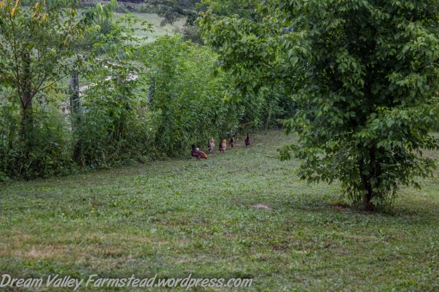 Chicken Littles 3