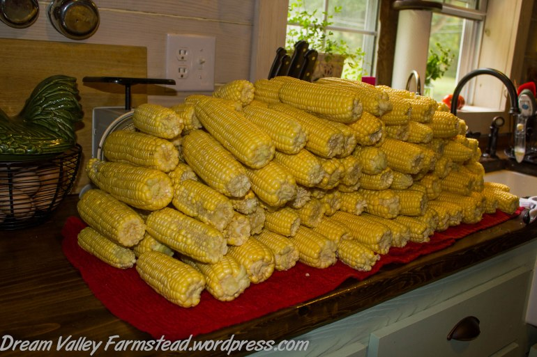 corn corn corn 3