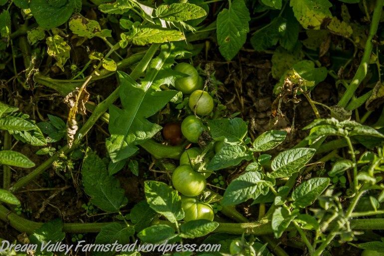 garden remnants 3