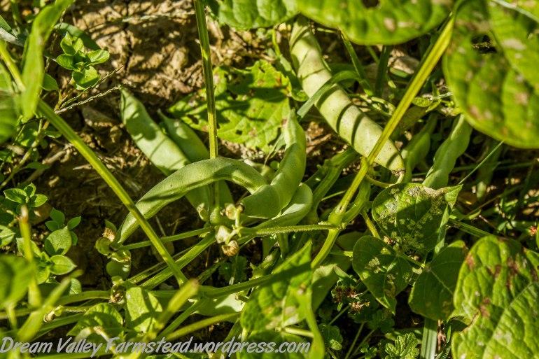 garden remnants 5