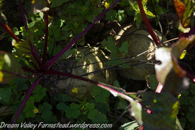 garden remnants 9