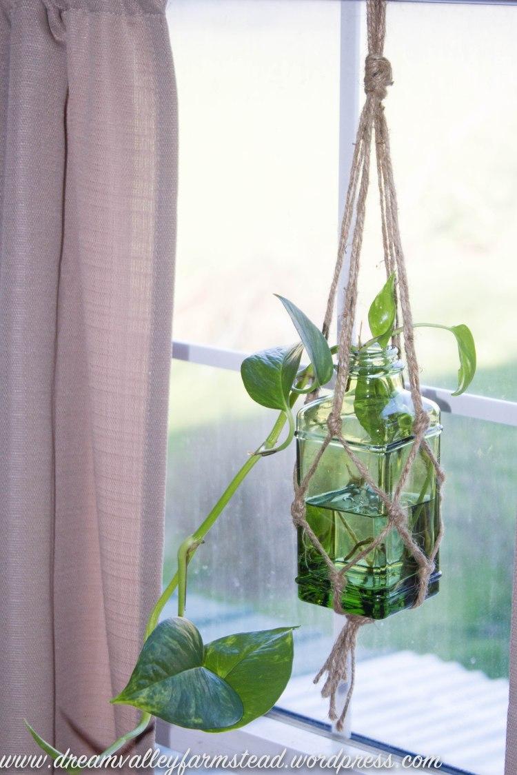 plants n greenhouse 3