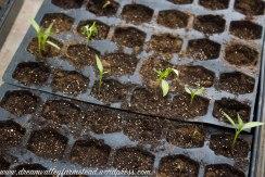 plants n greenhouse 6