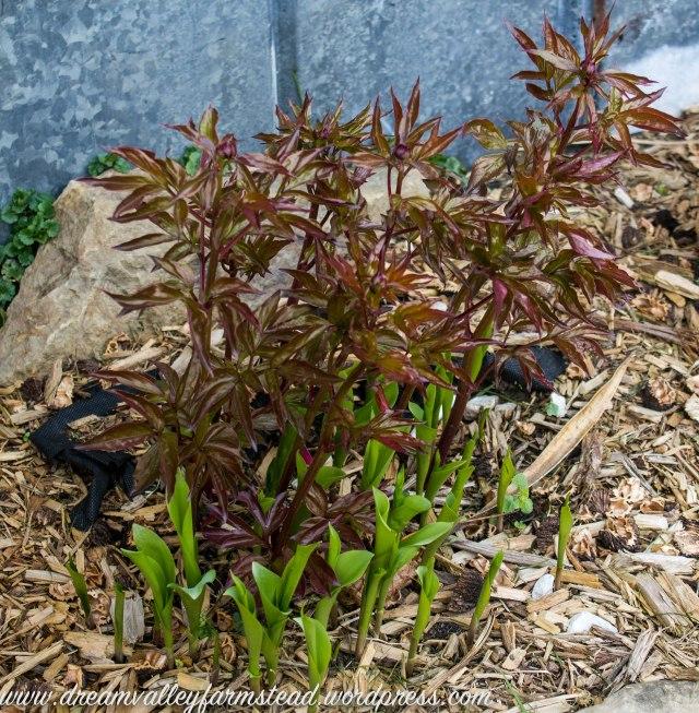 plants n greenhouse 9