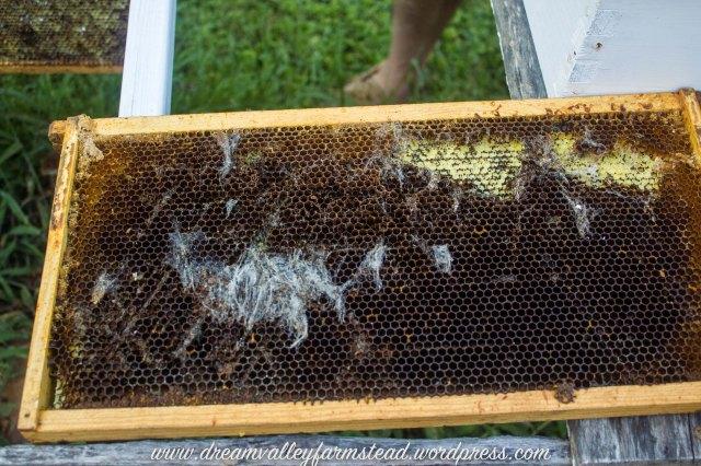 bee hive fail 1