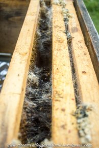bee hive fail 4