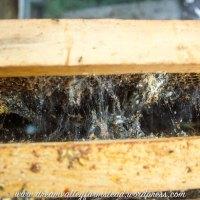 Bee Hive Fail