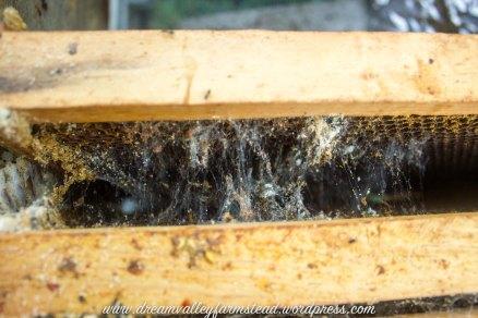 bee hive fail 5