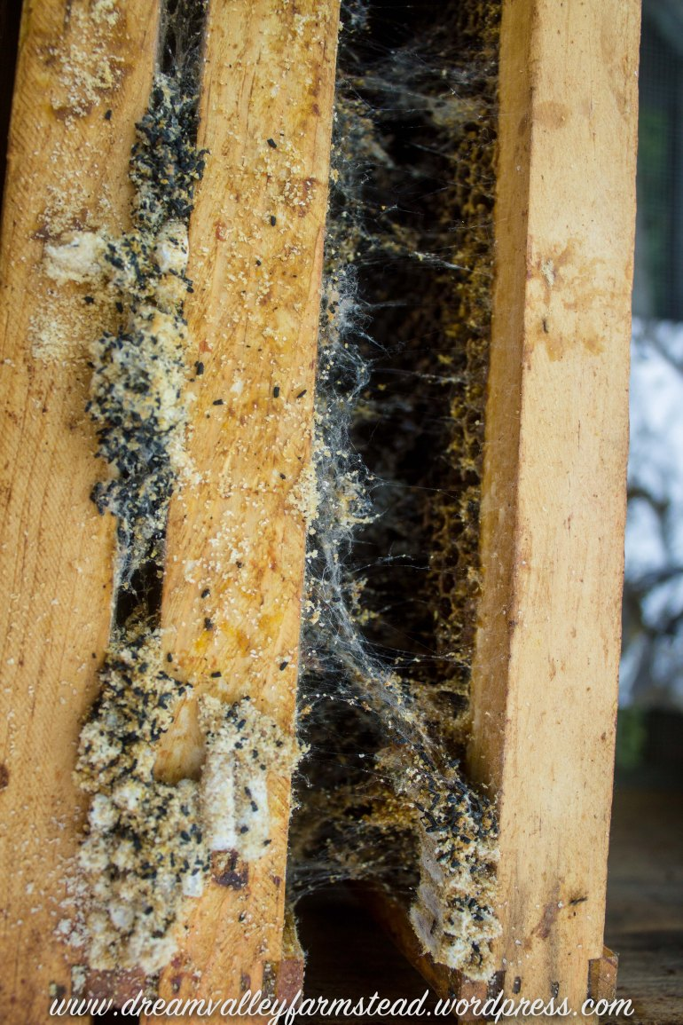 bee hive fail 6