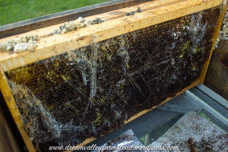bee hive fail 7