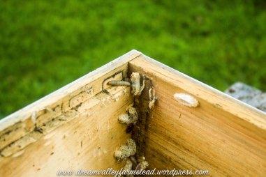 bee hive fail 8