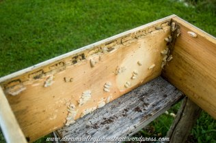 bee hive fail 9