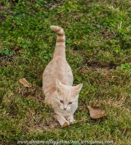 Autumn Kitties4