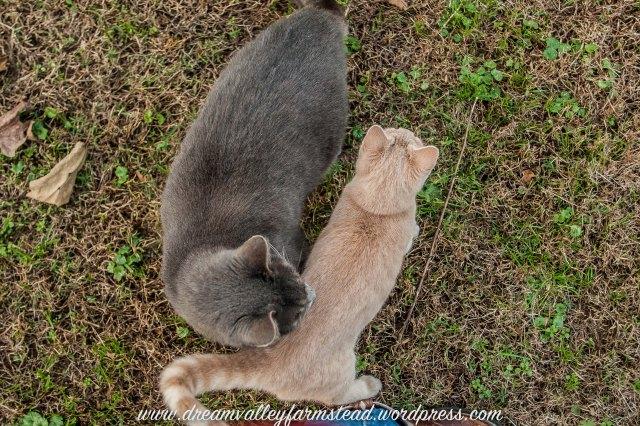 Autumn Kitties5