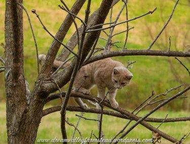 Autumn Kitties7