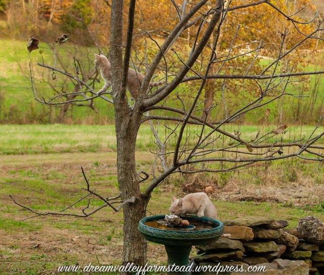 Autumn Kitties8